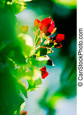 Abstract flowers - Red flowers and green foliage with...