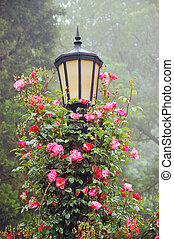 Lamp post and roses - Pink roses climbing on black lamp post