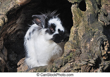 black white hare from the zoo enjoying the sun
