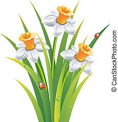 Clip art et illustrations de jonquilles 1 635 graphiques - Dessin jonquille fleur ...