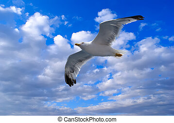 A seagull in clouds and blue sky