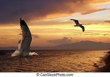 Two seagulls at sunset on a beach - Two seagulls at sunset...