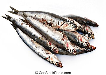 Several anchovies stacked side by side isolated on white...