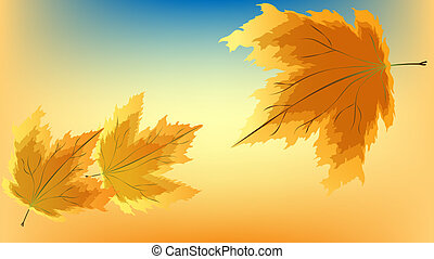 Falling maple leaves in gold and orange