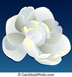 Single magnolia blossom on blue background.