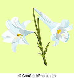 Three white Easter lilies in a bouquet on a pale green background.