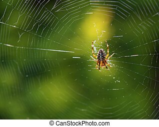A spider is spinning/ weaving its web