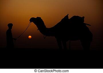 man looking at his camel