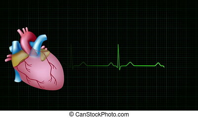 heart beat ecg background loop - heart beats precisely...