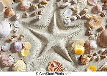 beach white sand starfish print many clam shells - beach...