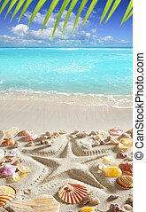 beach sand starfish print caribbean tropical sea - starfish...