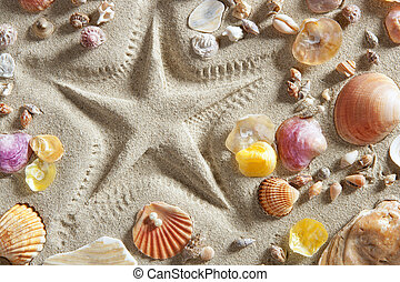 beach white sand starfish print many clam shells - beach...