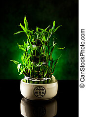 Bamboo plant - photo of bamboo plant on black glass table...