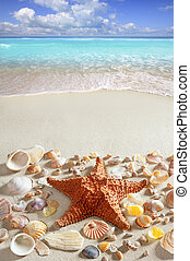 beach sand starfish caribbean tropical sea summer vacation...