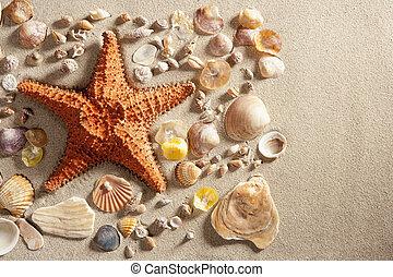 beach white sand starfish many clam shells summer - beach...