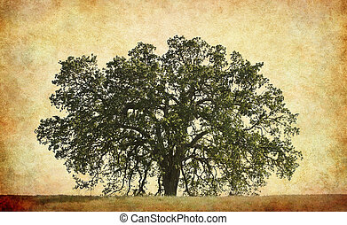 Oak Tree with Textured Background - An old oak on a vintage,...