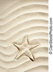 beach starfish print white caribbean sand summer - beach...