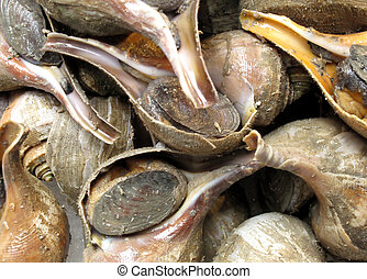 Conch Pile - Exotic Cuisine: Conch Still in Shells Fresh...