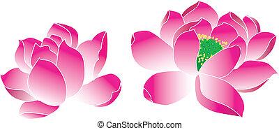 lotus(waterlily) - lotus waterlily,
