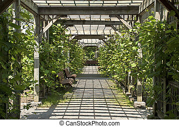 Pergola in a botanical garden - Sun drenched pergola with...