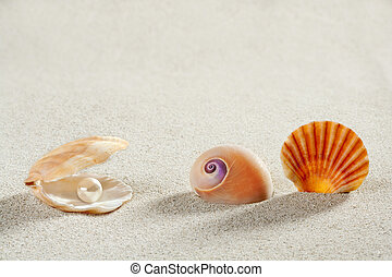 sommer, Schale, urlaub, Perle, Muschel, hintergrund, sandstrand
