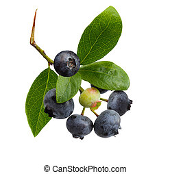 Blue Berries - Ripe blueberry on branch isolated on white...