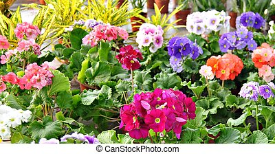 Flowerpots of different colors