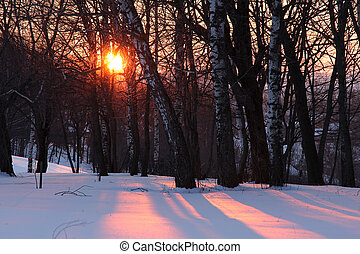 Winter sunset - Sunset in winter forest