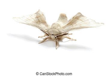mariposa, blanco, gusano de seda, seda, gusano, aislado