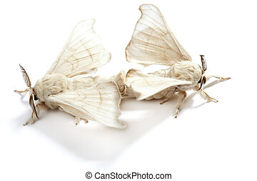butterfly of silkworm silk worm isolated on white - two...