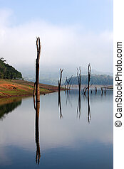 Periyar Lake Reserve in mumnar Kerala state india