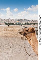 encima, montón, templo, vista