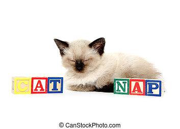 Cute kitten taking a nap - Cute baby cat taking a nap in...