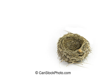 empty nest with an insect walking on the white background -...