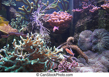 aquarium background - sea aquarium as very nice natural...