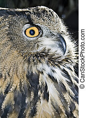 Portrait of wise owl by a large plan