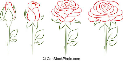 Blooming roses Vector illustration Vector illustration...