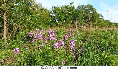 Illinois Prairie Scene - Prairie plants sway in the wind on...