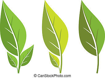 set of leaves - collection of green leaf