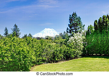 Mount Rainier with trees on the front from Lakewood, WA