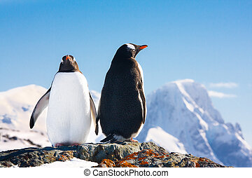 Two penguins dreaming sitting on a rock, mountains in the...