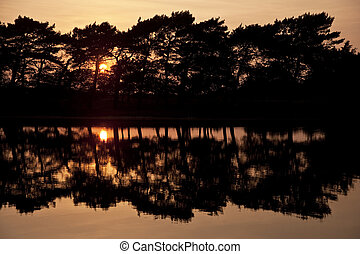 Beautiful simple image of sunset through tress reflected in...