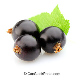 Blackcurrant with leaves
