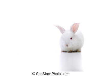 White beautiful rabbit, Easter bunny on large copy-space