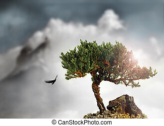 High tree - Stylized landscape photo of a single cypress...