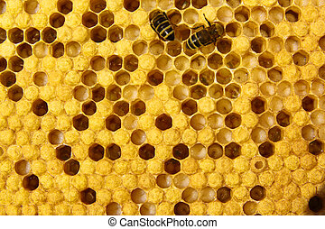 Feeding larvae - Adult bees feed the larvae, which are in...
