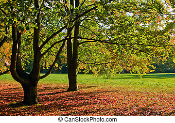 autumn - Vibrant autumn trees in a park, Frankfurt, Germany