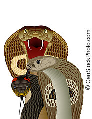 Snakes - Poisonous snake The illustration on white...