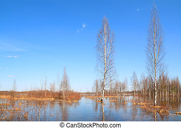 birch wood in blue water