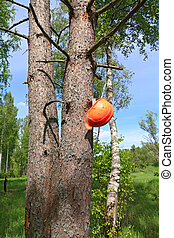 helmet of the woodsman on tree
